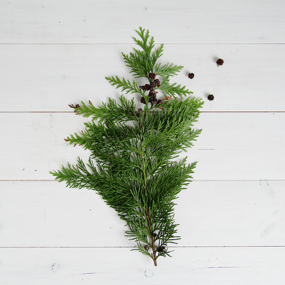 Fall For DIY Christmas Evergreen Plant Pic
