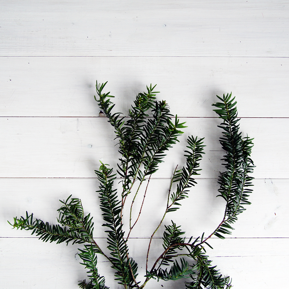 Fall-For-DIY-Christmas-Evergreen-Plant