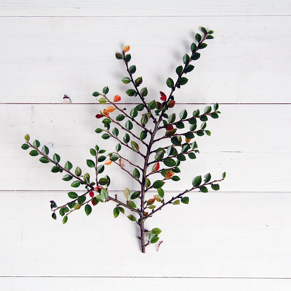 Fall For DIY Christmas Evergreen Plants Pic