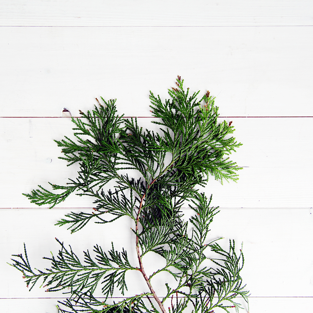 Fall For DIY Christmas Evergreens Plant Pic