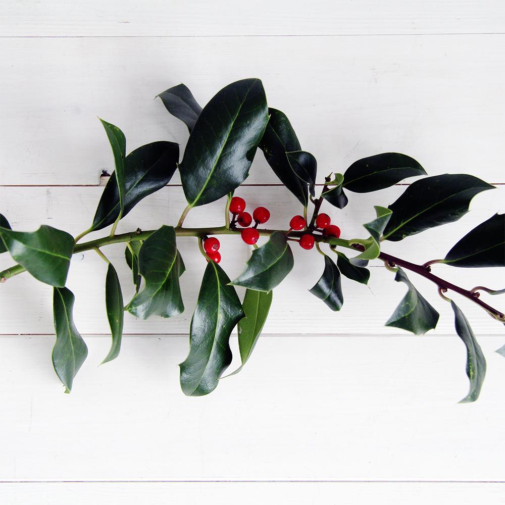 Fall For DIY Christmas Plants Pic