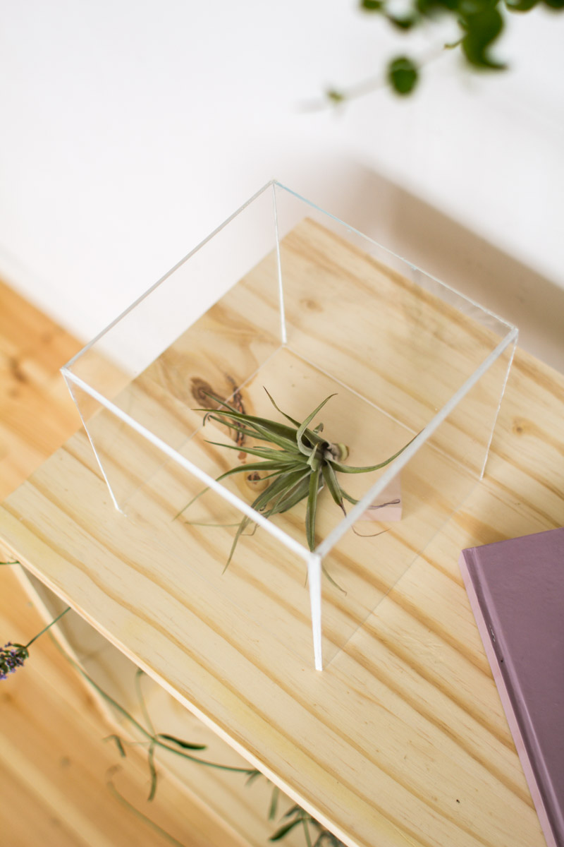 Fall For DIY | Air plant display box