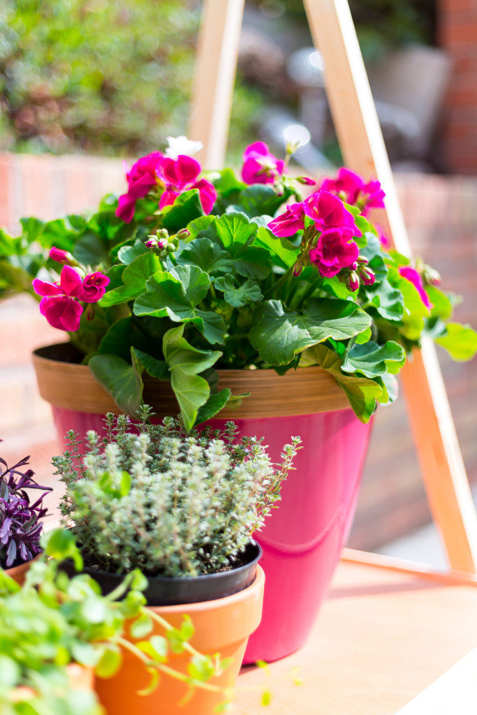 DIY Ladder Plant Shelf for a Small Garden or Balcony | @fallfordiy-20